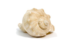 Sea shell macro on white background Royalty Free Stock Photography