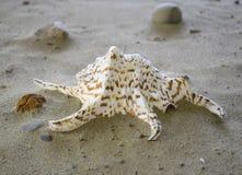 Sea shell motley. With stones beautiful Stock Photos