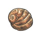 Sea shell nautilus. Color engraving vintage illustration. Isolated on white background Royalty Free Stock Photo