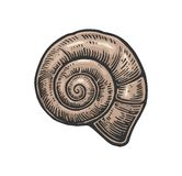 Sea shell nautilus. Color engraving vintage illustration. Isolated on white background Stock Images