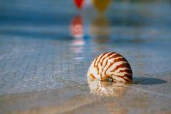 Sea shell nautilus on swimming pool edge at  resort Royalty Free Stock Image