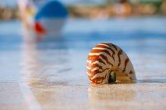 Sea shell nautilus on swimming pool edge at  resort Stock Photography