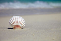 Sea shell near with ocean. Sea shell with ocean on background Royalty Free Stock Photos