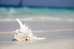 Sea shell near with ocean. Sea shell with ocean on background Stock Images