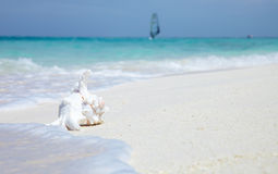 Sea shell near with ocean Royalty Free Stock Photos