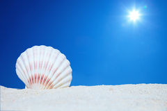 Sea shell near with ocean. Sea shell with ocean on background Royalty Free Stock Image