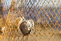Sea Shell on Net Stock Photography