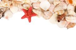 Sea Shell On A White Stock Photo
