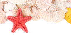 Sea Shell On A White Stock Image
