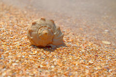 Sea shell over sand and chips pf seashells as background blurred copyspace Stock Photography