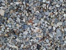 Sea shell pad Stock Photo