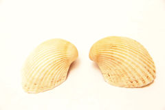 Sea shell pair isolated on the white background Stock Photo