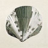 Sea shell in pastel colors - oil painting. The sea shell in pastel colors - oil painting Stock Photography