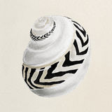 Sea shell in pastel colors - oil painting. The sea shell in pastel colors - oil painting Royalty Free Stock Photography