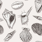 Sea shell pattern 4 Stock Image