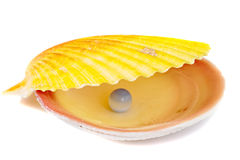 Sea shell and pearl Royalty Free Stock Image