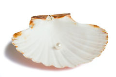 Sea shell with pearl Royalty Free Stock Photography