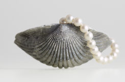 Sea shell and pearl Royalty Free Stock Photography