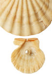 Sea shell and pearl Royalty Free Stock Photos