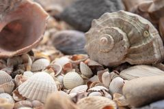 Sea shell pearl background. Seashells texture closeup.ish, sand, coral in the beach stock photo