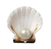 Sea shell and pearl holiday travel Royalty Free Stock Images