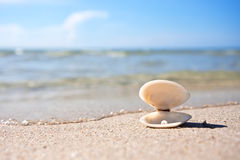 Sea shell with pearl. On the sandy beach Stock Images