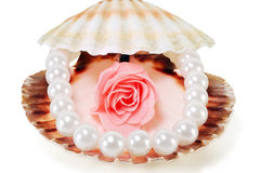 Sea shell with pearls and a rose. On a white background Royalty Free Stock Photography