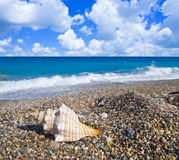 Sea shell on pebble beach Stock Photography