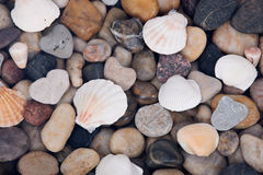 Sea shell and pebble stone background Stock Images