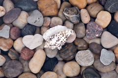 Sea shell and pebble stone background Royalty Free Stock Images