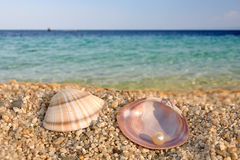 Sea shell and the perl Stock Photography