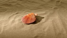 Sea shell, pink, on sand, back light, rotation stock footage