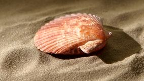 Sea shell, pink, on sand, back light, rotation stock video footage
