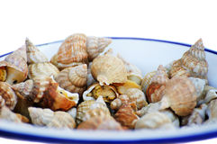 Sea shell on a plate Royalty Free Stock Images