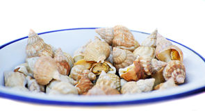 Sea shell on a plate Royalty Free Stock Photo