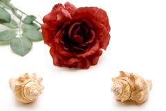 Sea shell with red rose Stock Images