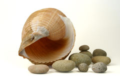 Sea shell and round stones. Isolated on white background Stock Photo