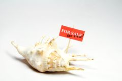Sea Shell for Sale. With sea view sign Royalty Free Stock Photo