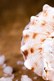 Sea shell and salt Stock Image