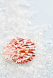 Sea shell and salt Stock Photos