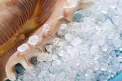 Sea shell with salt on blue. Sea shell with dead sea salt on blue Royalty Free Stock Images