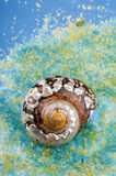 Sea shell on salt grains. Royalty Free Stock Photo