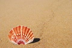 Sea shell on sand. Sea shell on a sandy beach Stock Photos