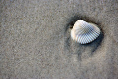 Sea Shell in the Sand Stock Image