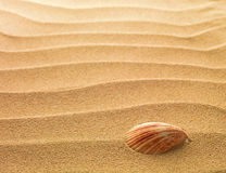 Sea shell with sand. As background Royalty Free Stock Images