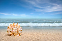 Sea shell on sand. At the beach stock photography