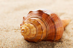 Sea shell on sand Royalty Free Stock Photos