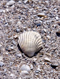 Sea Shell in the Sand. A sea shell in the sand on the beach Royalty Free Stock Photo