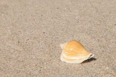Sea shell with sand as background Royalty Free Stock Image