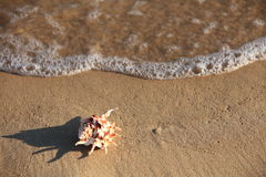 Sea shell with sand as background Stock Photography